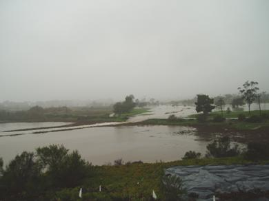 Storm 2005