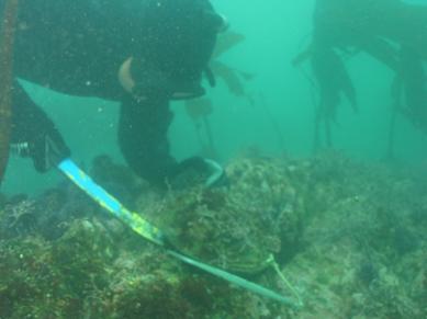 Ab diving